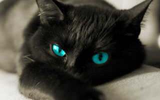 Стихи про любимую кошку